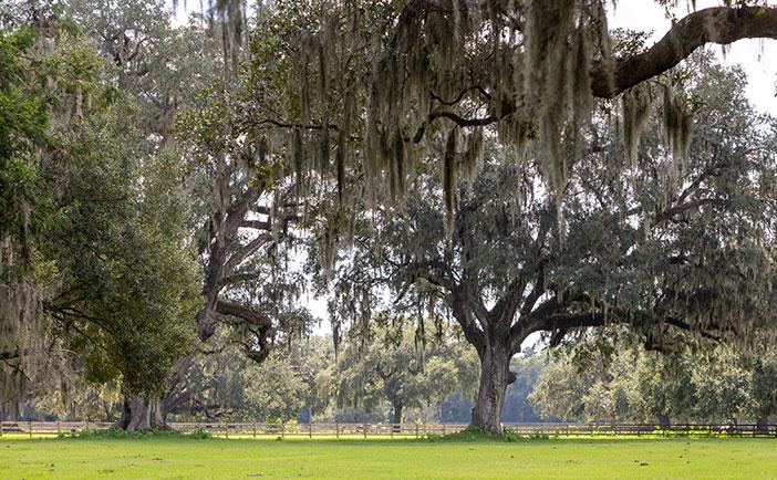 Johns Island Charleston Real Estate William Means